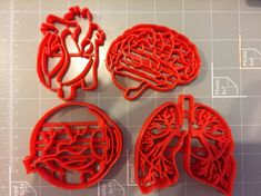 Human Tissue Anatomy Cookie Cutter (Set of 4) How To Make Cookies, Anatomy And Physiology, Human Anatomy, Human Tissue, Cookie Cutter Set, Heart Cookies, Nursing Students, Nurse Life, Cookie Decorating
