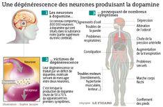 Maladie de Parkinson, de la cellule à l'homme