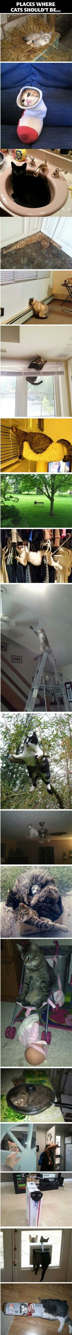 Places where cats shouldn't be. Funny cats...lolcats...