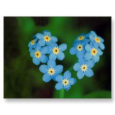 A forget me not flower heart...this is the cutest thing