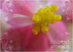 Begonia Macro by Debbie Portwood
