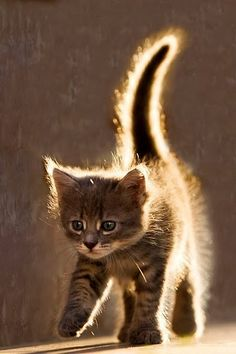 "Picture is called ""cat aura"" because of the way the sun is hitting the kitten. Its precious and cute. ~Me"