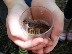 At Sutton Courtney Environmental Education Centre: Minibeast hunting gives the children the opportunity to discover first hand where different bugs live and how they have adapted to their environment.