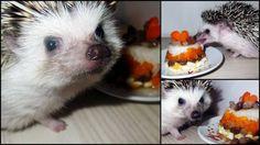 Hedgie birthday