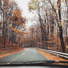 Autumn nature on the road
