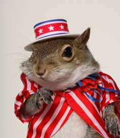"""most photographed supermodel"" according to google, sugar bush squirrel."