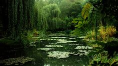 Monet's House Giverney, France Claude Monet, Weeping Willow, Foto Art, Belleza Natural, Photos, Pictures, Belle Photo, Organic Gardening, Gardening Blogs