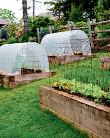 Build A Greenhouse, Greenhouse Gardening, Greenhouse Ideas, Cheap Greenhouse, Portable Greenhouse, Flower Gardening, Porch Greenhouse, Homemade Greenhouse, Herb Gardening