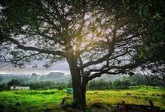 Árboles... #asturias #places #lugares #summer #verano #color #colorful #colorgrafias #HuaweiP20Pro @huaweimobileesp #green #arbol #tree