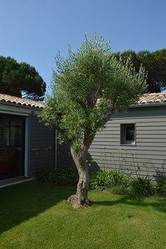 Luxury villa rent Ile de Ré | SJ Villas | architect designed house, beach. Pool. Maid service. Sleeps 10.