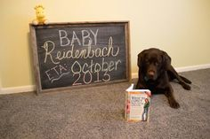 #Pregnancy #Announcement #Dogs #Wereexpecting