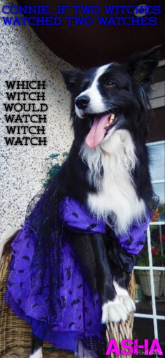 WHICH WITCH WOULD WATCH WITCH WATCH CONNIE?
