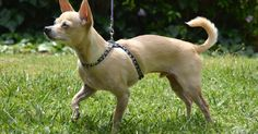 The Dog Geek: Product Review: Coastal Pet Size Right Harness