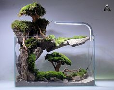 If in case you have achieved the right planning to your new aquarium, you have already bought, or in any other case acquired, every thing it's essenti. Water Terrarium, Aquarium Terrarium, Terrarium Plants, Aquarium Garden, Aquarium Landscape, Aquarium Fish Tank, Aquarium Design, Aquarium Backgrounds, Plantas Bonsai