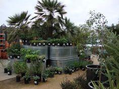 danger garden: Flora Grubb Gardens