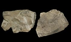 An international group that includes a University of Kansas researcher has discovered a brownish piece of split limestone in a site in Croatia that suggests Neanderthals 130,000 years ago collected the rock that stands out among all other items in the cave.
