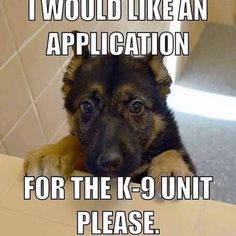 I would like an application for the K-9 unit please.