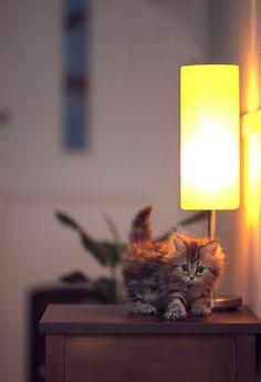 Extremely photogenic kittycat