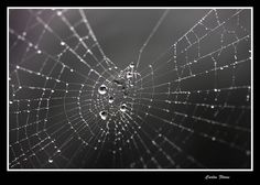 cobweb spider pictures - Google Search