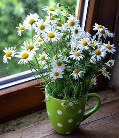 A mug of daisies - perhaps actually white cosmos. Happy Flowers, My Flower, White Flowers, Flower Art, Beautiful Flowers, Beautiful Flower Arrangements, Floral Arrangements, Sunflowers And Daisies, Daisy Love