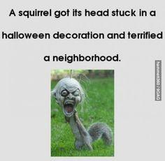 The troll squirrel