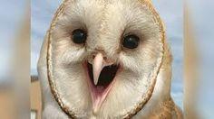 bird smile - Google Search
