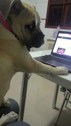 Navegando na net #Athena
