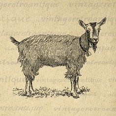 Cute Goat with Bell Graphic Digital Printable Farm Animal Image Illustration Download Artwork Antique Clip Art 18x18 HQ 300dpi No.3166 @ vintageretroantique.etsy.com #DigitalArt #Printable #Art #VintageRetroAntique #Digital #Clipart #Download