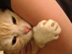 gold glitter soft paws http://www.softpaws.com/exclusivecolors.html