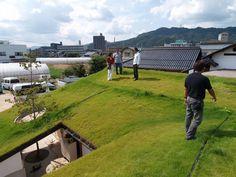 #green #rooftop pinned by @dakwaarde