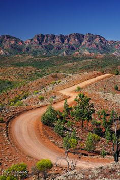 View of the mountain ranges and the valley with a winding dirt road (from Razorback Lookout in Flinders Ranges National Park in South Australia outback)