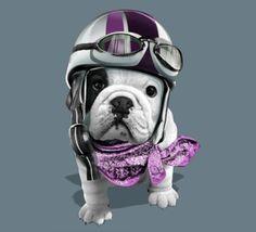 Teo Jasmin pour nos chiens