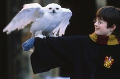 El mundo y el internet se volvieron locos con la celebración de los 20 años de Harry Potter y nosotros te contamos cómo la saga cambió la vida de la escritora y de los fans. ¡Gracias Harry Potter por enseñarnos que existe la magia en cada uno de nosotros! #KMXmagazine #harrypo