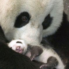Pandas ^_^