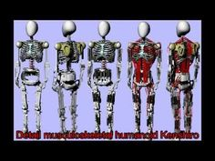 Meet Kenshiro, developed by Japanese researchers as a bio-inspired humanoid robot. Learn more: http://spectrum.ieee.org/automaton/robotics/humanoids/kenshiro-robot-gets-new-muscles-and-bones