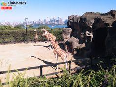 @ Toronga Zoo