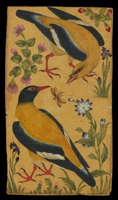 Two orioles north India, c. 1610 The early Mughal rulers took a keen interest in the flora and fauna of their new empire. This composition of orioles among flowering plants, with one bird about to seize an insect, is closely related to European botanical and natural history studies which had begun to reach the Mughal court by the late 16th century. The upper bird is a male Indian Golden Oriole, the lower bird a male Black-hooded Oriole.