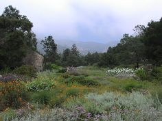 Natural looking meadow plantings at Santa Barbara Botanical Garden - quite like this orange / silver / purple colour mixture.