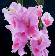Flower of Month August - - Yahoo Image Search Results