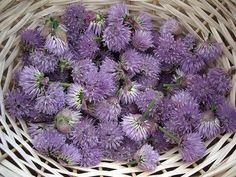 http://www.treehugger.com/green-food/7-basic-recipes-preserve-edible-flowers.html