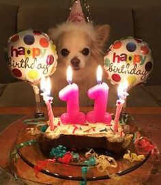 We could do a WAY cuter First Birthday Kit for dogs. Maybe a bowl with a '1' at the bottom, a plush '1' toy, a hat, candle
