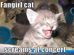Screaming #kitty  All about #dogs #cats here, check it out