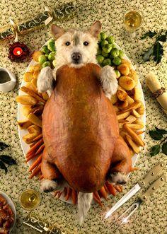 ALLPE Medio Ambiente Blog Medioambiente.org : Raggle, un perro que es todos los animales por Navidad