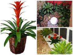 planta-jardim-inverno-para-ter-em-casa5