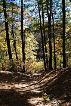 Walden Pond - one of the beautiful paths in one of my favorite places in the world
