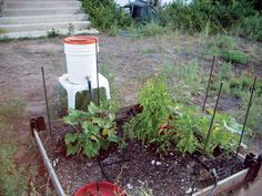 A reader explains how waste water collected from your kitchen sink can become the feed source for a grey water irrigation system in your vegetable garden. Originally published as Water Irrigation System, Drip Irrigation, Grey Water System, Water Systems, Water Garden, Lawn And Garden, Garden Hose, Grey Water Recycling, Garden Watering System