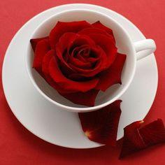 Latest Good Morning Images, Good Morning Picture, Morning Pics, Wallpaper Pictures, Pictures Images, Photo Wallpaper, Hd Images, Pretty Pictures, Bon St Valentin