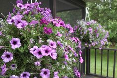Keeping Potted Plants and Hanging Baskets Beautiful All Summer Long At TheFarm