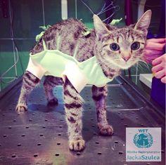 #kitty #cat #kot