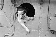 "Bulldog Breed ...""Venus"", British bulldog mascot of the destroyer HMS Vansittart, on the lookout, 1941. Best regards, JR."